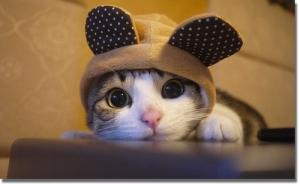 Cute-Kitty-Hat