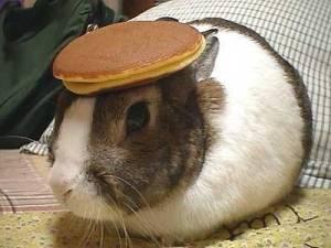 bunny_pancake1