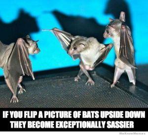 upside-down-sassy-bats
