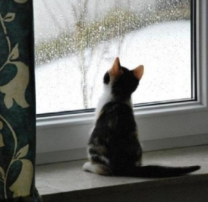 Looking-on-The-Rain