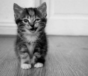 Winking_Cat_11-540x466