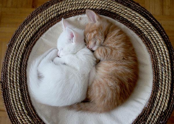 фото рыжей кошки с двумя котятами