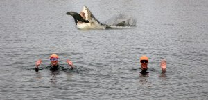 open_water_swim shark