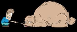 THE-BEAR-1b